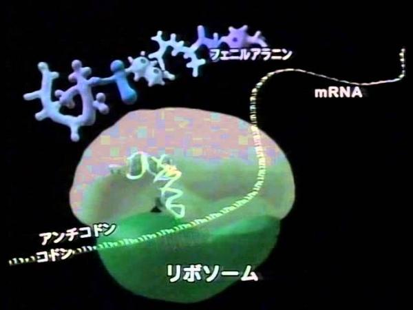 生物基礎22 生物23 2004mRNAが核外のリボゾームでtRNAが持ってきたアミノ酸の並ぶ389