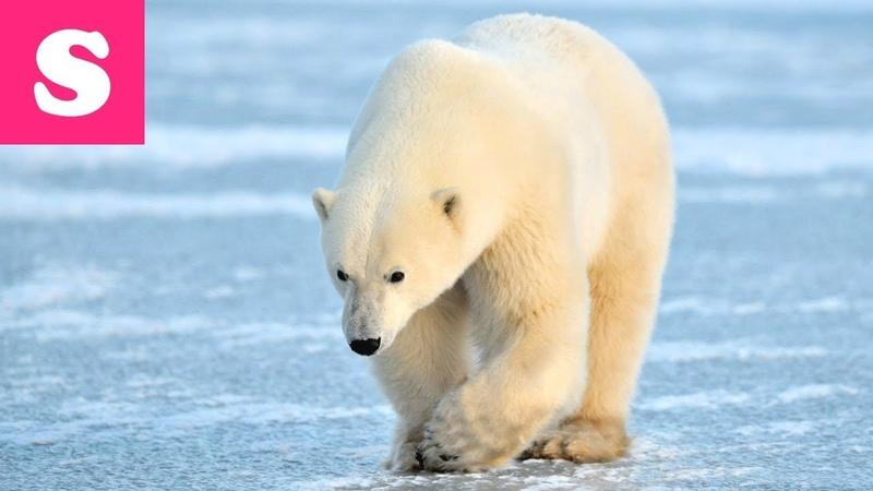 Устали от жары и летнего зноя? Предлагаем отправиться в Арктику - новое видео на канале Стефа ТВ