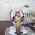 luxury cat life
