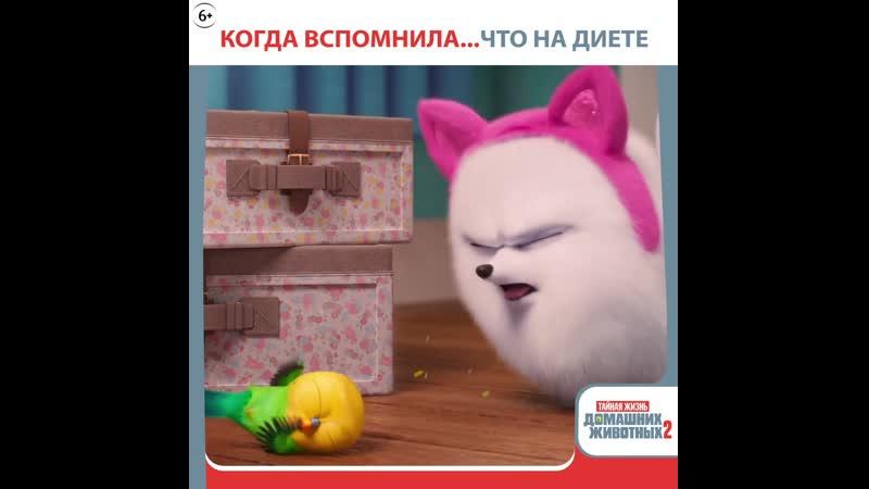 SP2_GIF_DIET MEME_1x1_OV_EN_TXTD_H264_ru