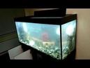 500л аквариум Зеленоградские Аквариумные Комплексы с тумбой металлокаркас Стиль Псевдоморе Ч1