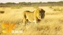 African Wildlife Document. 2018.04.07. Film - Etosha National Park, Namibia, Africa