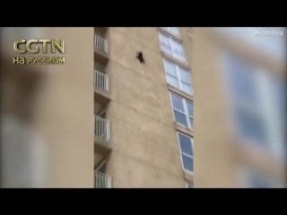 В Нью-Джерси енот упал с 7 этажа и выжил
