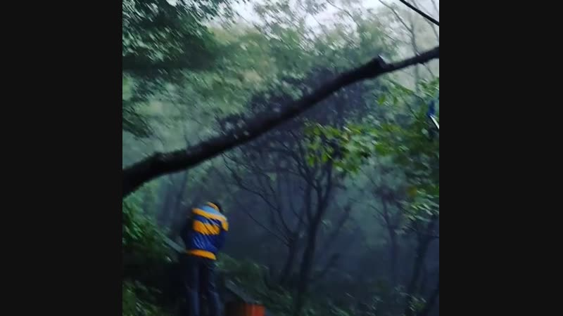 Foggy Forest 武当山 Wudangshan Mountains