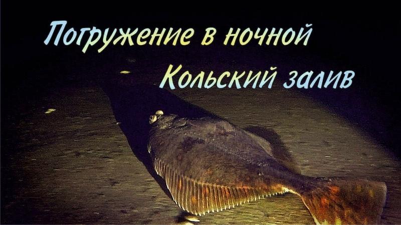 Погружение в ночной Кольский залив / Dive into the night Kola Bay