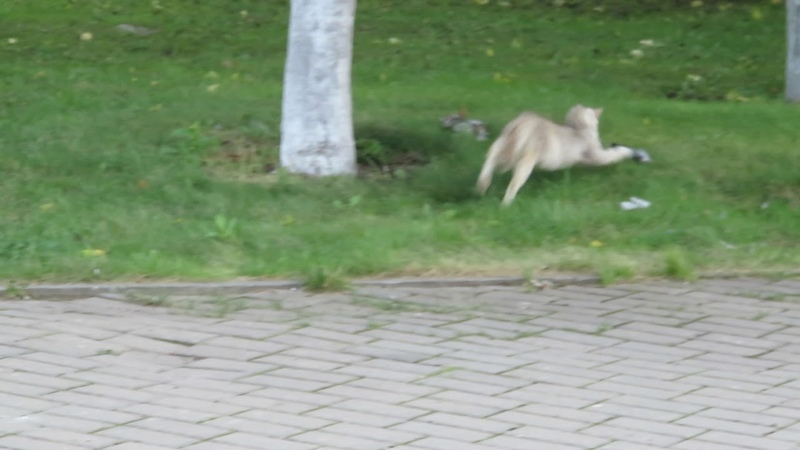 Кошка и вороньи останки в Иосифо-Волоцком монастыре