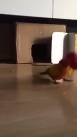 Parrot Vibrates Frantically While Holding Plastic Cup
