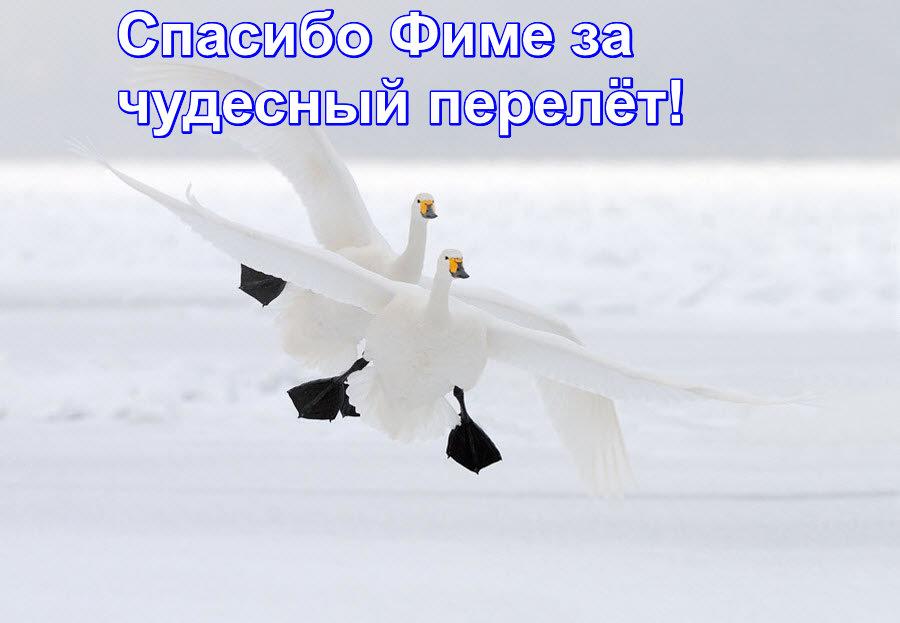 https://pp.userapi.com/c851024/v851024339/7a160/Tllfrm6C-RE.jpg