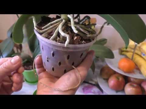 🔵 НУЖЕН ЛИ МОХ ОРХИДЕЯМ? 🤔 Практика о моих орхидеях.