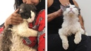 Street Cat Can't Stop Cuddling His Rescuers