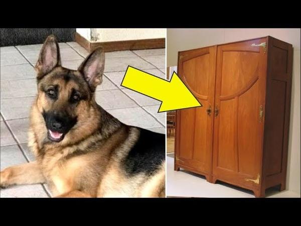 Он спрятался в шкафу, когда грабители вошли в его дом, но его собака сделала что-то неожиданное