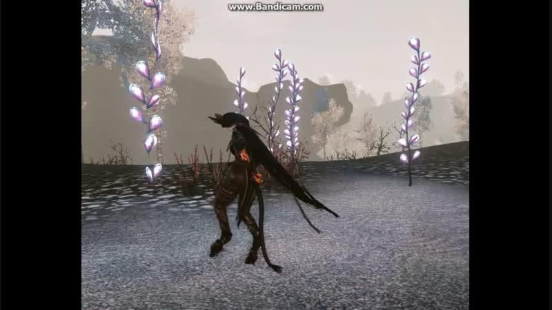 Arche Age Танец чёрного лебедя