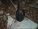 18.09.18 «Факты. Происшествия»