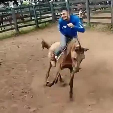 А конь не так-то прост... coub