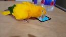 Bird dancing to Kendrick Lamar's HUMBLE