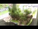 Посади семейное дерево