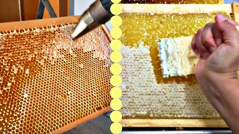 BEST HONEYCOMB UNCAPPING ON YOUTUBE-Oddly Satisfying
