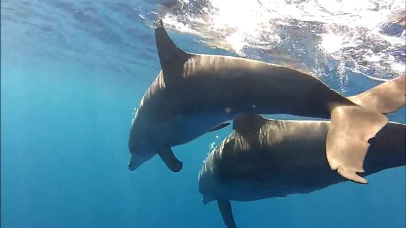 Гармония Водного Мира с Дельфинами