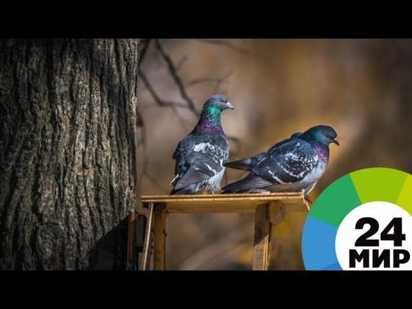 В Петербурге развесили сотни кормушек, чтобы помочь птицам перезимовать - МИР 24