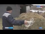 Карелия получит миллионы рублей на поддержку фермеров