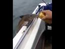 Жена не верит, что алкоголь беру для рыбы.. Пришлось снять на видео 😜
