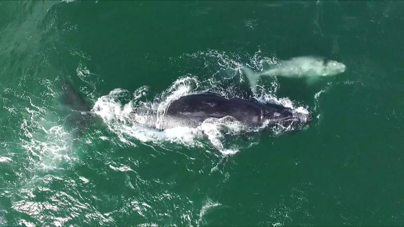 Китовое сафари в Херманусе