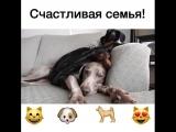 Счастливый собак и его друзья!