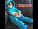 Приколы с котами и смешная озвучка животных – Лютые приколы с кошками от PSO