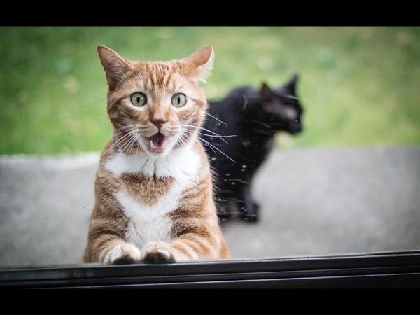 Кот нереально выгибается! гимнастические трюки кота CAT SPHYNX gymnastic stunts cat