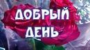 Пожелания Хорошего Дня Женщине Видео Открытка Хорошего Дня Женщине