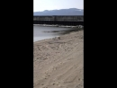 Видео-привет от Тэджин