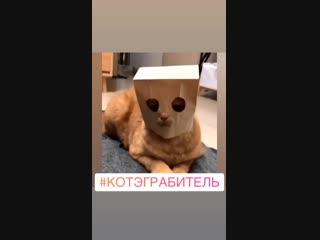 Кот грабитель