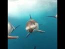 Черное море ДельфинСтайл