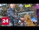 Собаки с уникальным чутьем: шалайку представили как новую породу - Россия 24