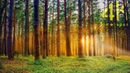 ''What Forest Can Offer'' 4K UHD Timelapse Photography Movie