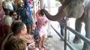 Паттайя . Деревня слонов