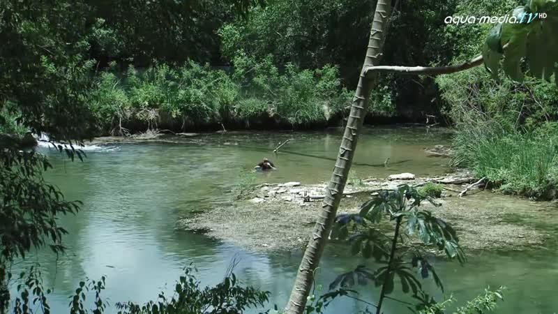 BIOTOP - Hyphessobrycon eques, Paraguay