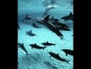 Поплавать с дельфинами моя мечта🐬
