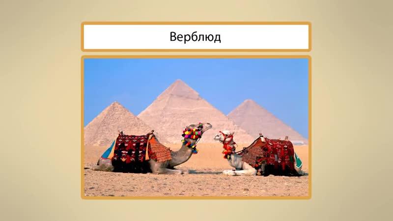 Пустыни. Видеоурок по окружающему миру 4 класс