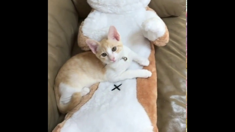 Rescued kitten misses his mom so they give him something to cuddle with