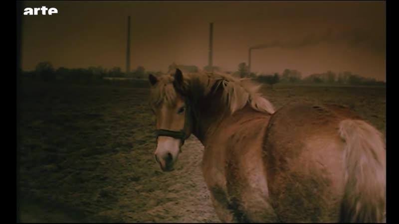 Le Cheval au cinéma - Blow up - ARTE [720p]