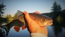 С кренками на малой реке. Рыбалка на Пьяне.