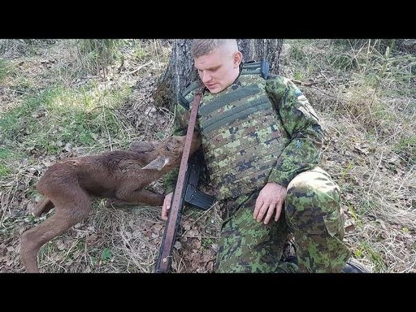 Беззащитный лосёнок подкрался к вооруженному солдату То что было после просто невероятно