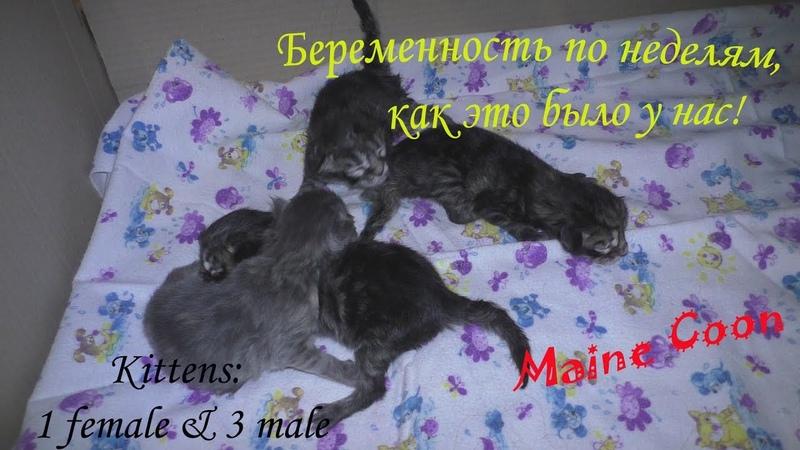 беременность кошек по неделям наш опыт сколько мы родим малышей
