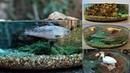 How to Make a Miniature Fish Pond Diorama | Resin Art