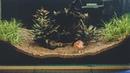 Запуск травника с Золотой Рыбкой Setup Planted Tank with Goldfish