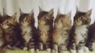 Heavy metal kittys