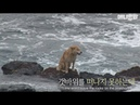 Why this stray dog stays on the rocky shore despite the crashing waves