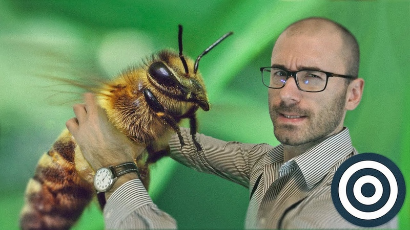 Пчёлы - это нечто