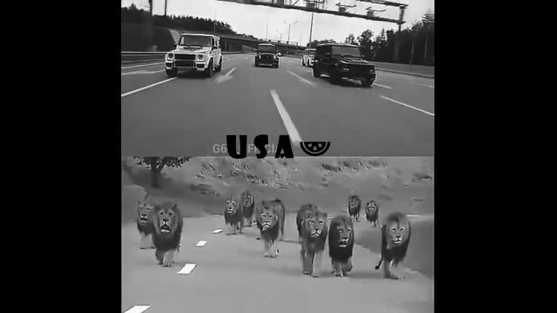 U S A 🍉